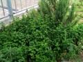 22 erbe aromatiche
