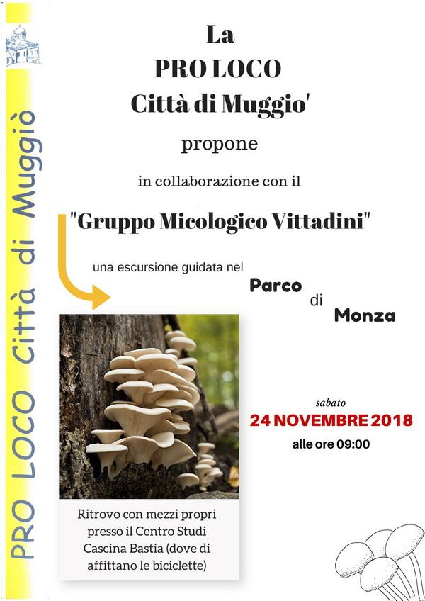 Gruppo Micologico Vittadini 2018-600